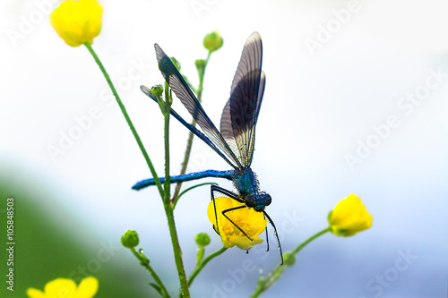 dragonfly on a flower on a spring meadow