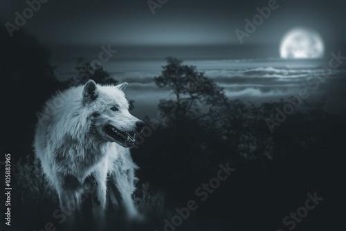 Fototapeta Full Moon Vlk Hunt