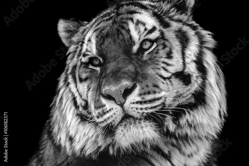 Photo Bold contrast black and white tiger face close-up