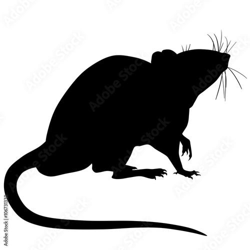 Fotografie, Obraz Silhouette of a rat