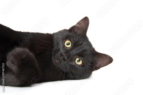 Fotografia Cute black cat on white