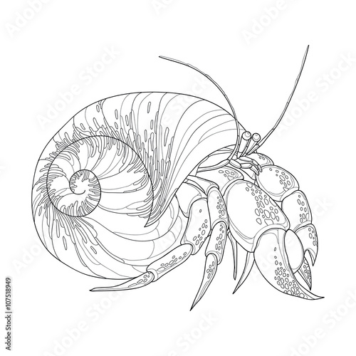 Vector illustration of Hermit Crab in the round gastropod shell isolated on white background Fototapeta