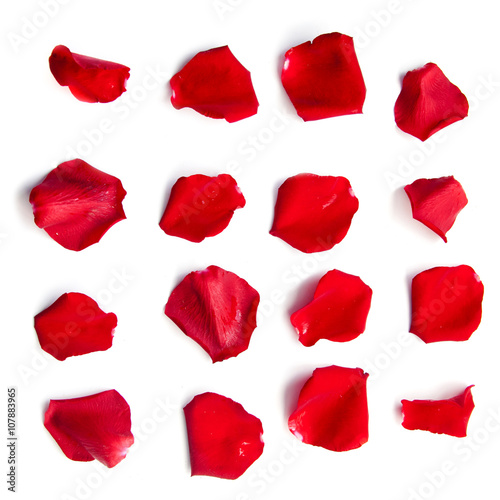 Photo Set of red rose petals on white