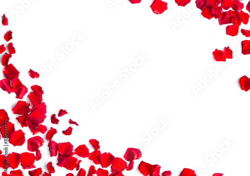 Canvas Print Red rose petals on white background
