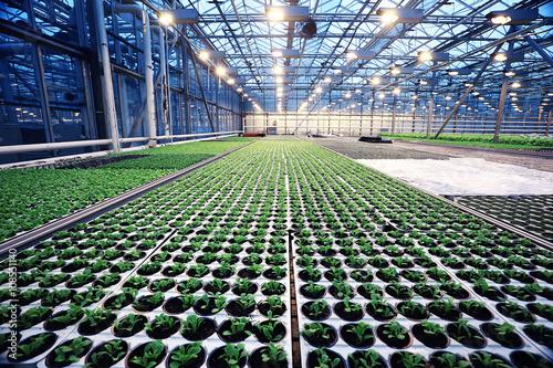 agribusiness greenhouse seedling spring Fototapet