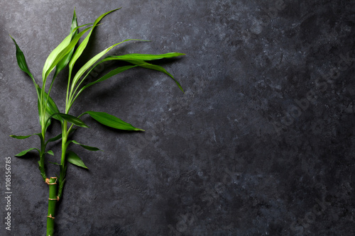 Bamboo plant over stone