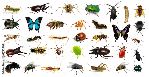 Foto Set of insects