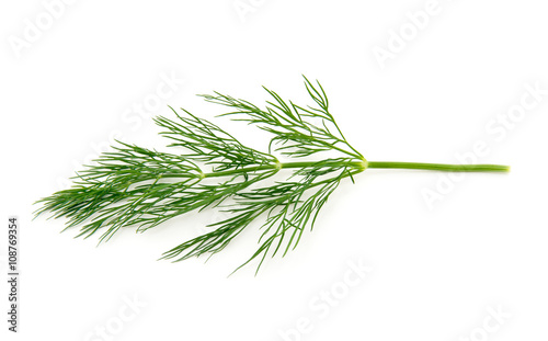 Canvas Print fresh dill on white background