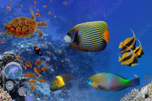 Fototapeta Kolorowa rafa koralowa z wieloma rybami i żółwiem morskim do pokoju