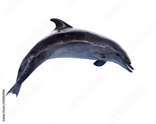 Canvastavla dark grey isolated doplhin in jump