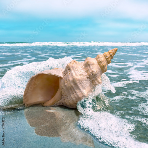 Conch Splash. A horse conch on a beach with ocean water splashing and flowing around it.