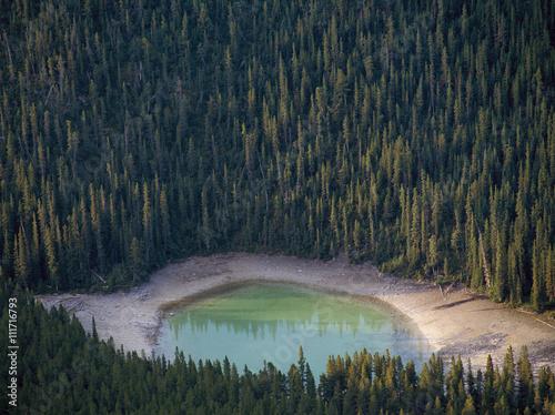 Fototapeta A small lake in pine-forest, Alberta, Canada.