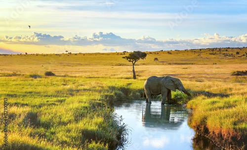 Photo Elepant cooling down in the water in Masai Mara resort, Kenya