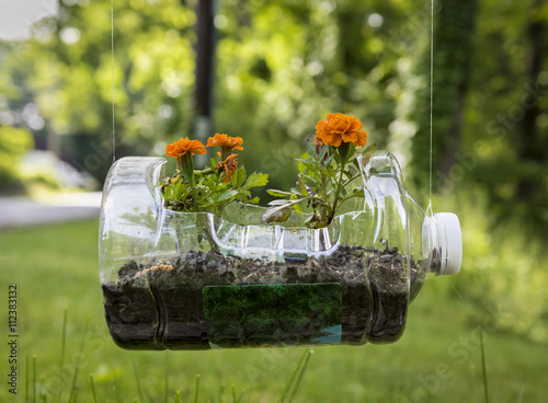 Recycled Plastic Planter with Geraniums: An old plastic jug recycled for use as a hanging planter with orange Geraniums