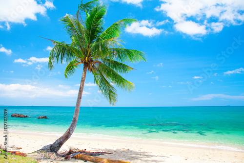 Leinwand Poster Tropischen Strand mit Kokospalme
