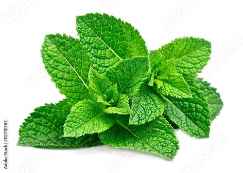 Mint leaf close up