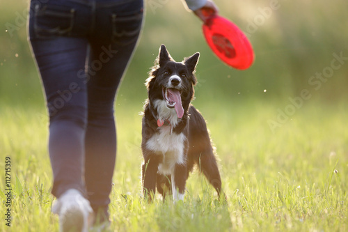 Foto Border collie and frisbee