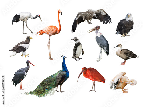 Fototapeta premium A collage of birds from different continents