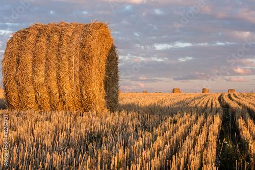 Tablou Canvas Haystacks on the field. Agricultural landscape