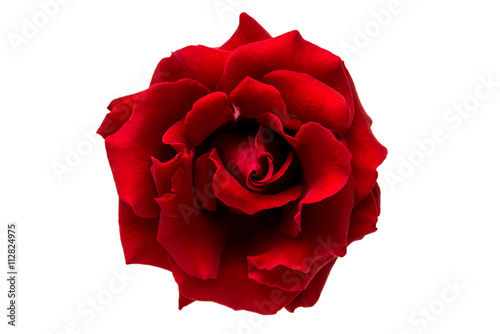 Canvas Print red rose isolated