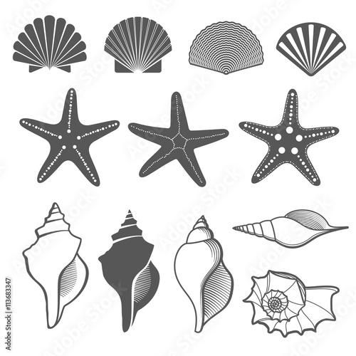 Fotografie, Obraz Sea shells and starfish vector set