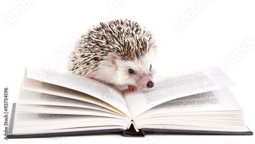 Fotografia, Obraz African hedgehog and book