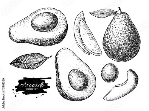 Fotografie, Obraz Vector hand drawn detailed avocado set. Sketch illustrations