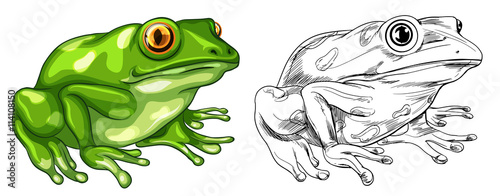 Canvas Print Drafting and colored picture of frog