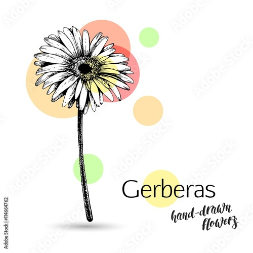 Fototapeta Gerbera flower for wedding or birthday card