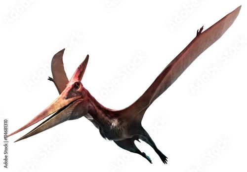 Fototapeta premium Pteranodon
