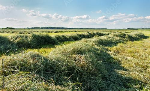 Canvas-taulu Mowed hay.