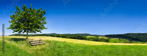 Fotografia Grüne Landschaft im Sommer als Hintergrund