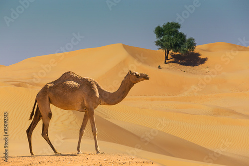 Wallpaper Mural Desert landscape with camel