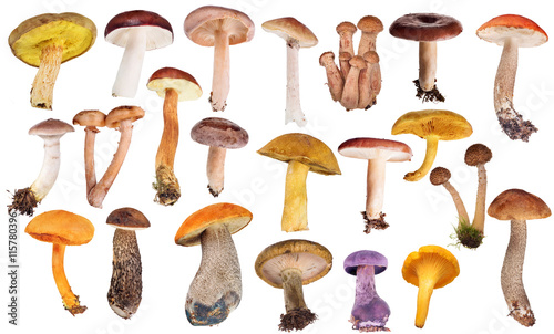 Fotografia set of twenty two edible mushrooms isolated on white
