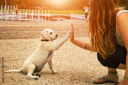 Foto Labrador Welpe und junge Frau geben sich ein High Five
