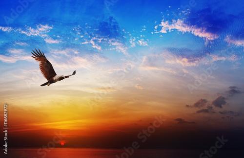 Bird of prey - Brahminy Kite flying on beautiful sunset backgrou