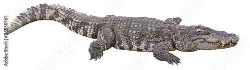 Photo crocodile big