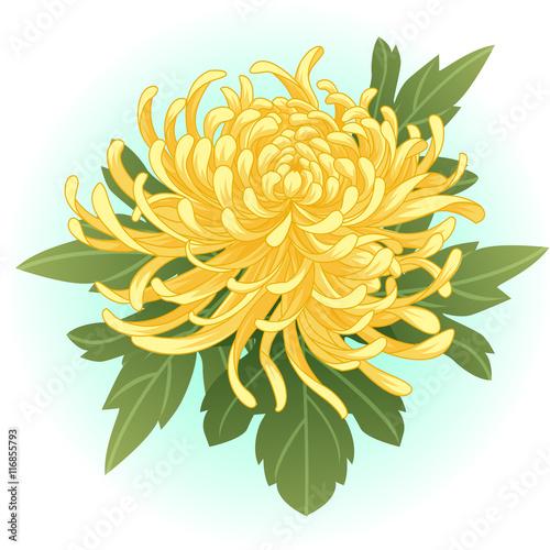 yellow chrysanthemum flower illustration vector Fototapet