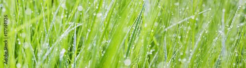 Fototapeta premium trawa z kroplami rosy - piękne tło bokeh