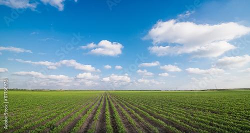 Fotografia Agricultural Field
