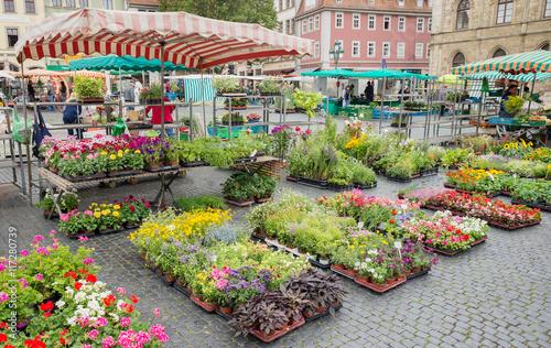 Fototapeta Square street market flower plant stand stall farmer town organic production Wei