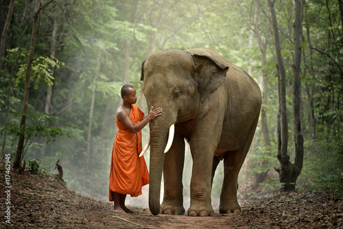 Fotografia Buddhist monk with elephant in forest, Cambodia