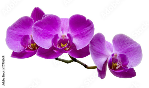 Photo Purple orchid on white