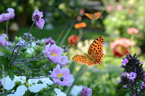 Fototapeta Blumen 731