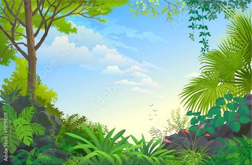 Vast blue skies above never ending green forest