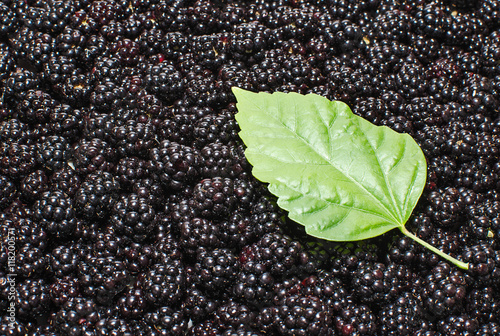 Canvas Print Background of ripe blackberry  with green leaf