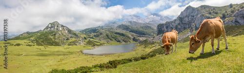 Lago de Enol Bergsee im Parque Nacional de los Picos de Europa (Picos d'Europa) Asturies (Asturien, Asturias) Spanien (España)