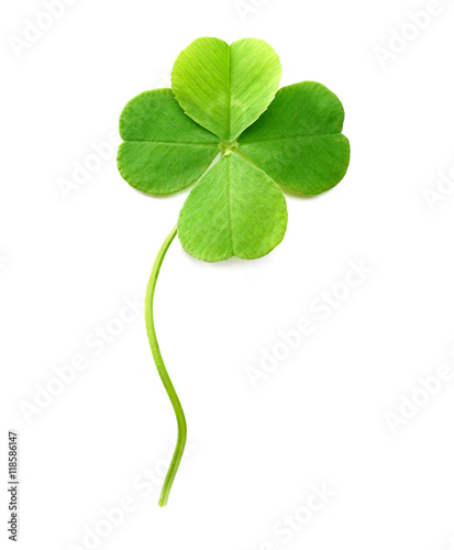 Cuadros en Lienzo Green four-leaf clover isolated on white