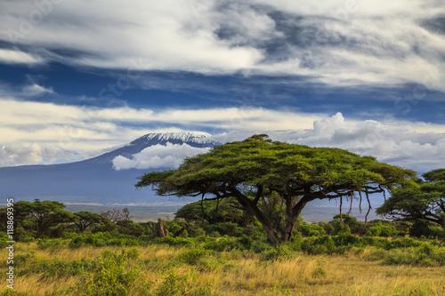 Beautiful African landscape on the background of Kilimanjaro. Ke