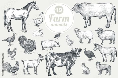 Tablou Canvas Farm animals